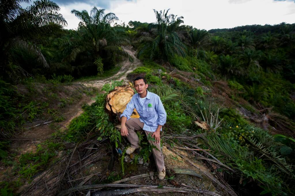 Rudi Putra leans against the stump of a recently cut palm oil tree.